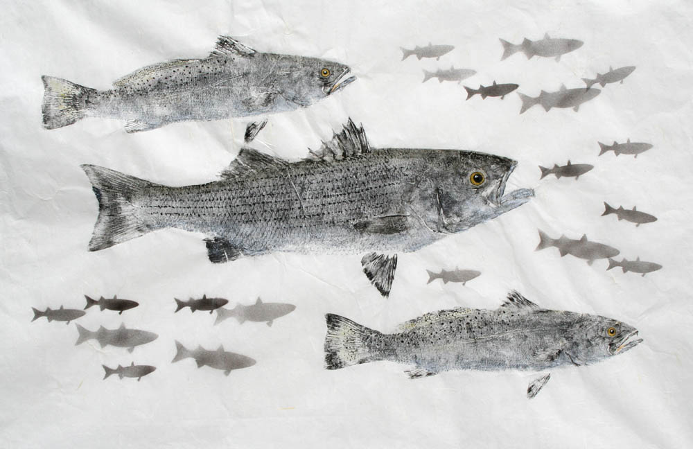 Striped Bass Speckled Trout Gyotaku Rubbing